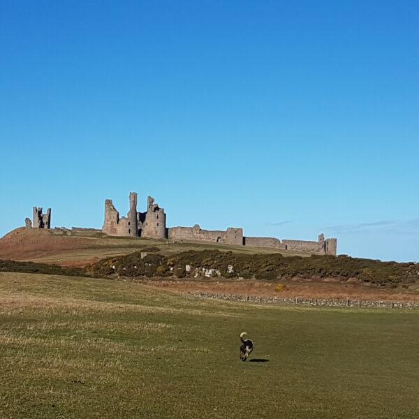 Dog walk at Craster to Dunstanburgh Castle
