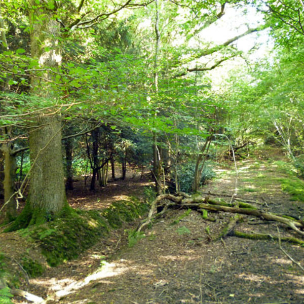 Creech Wood, near Anthill Common photo 1