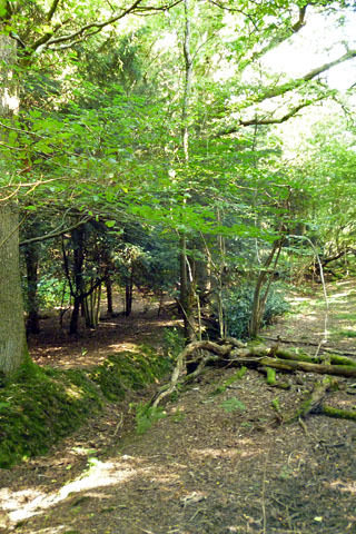 Dog walk at Creech Wood, near Anthill Common photo