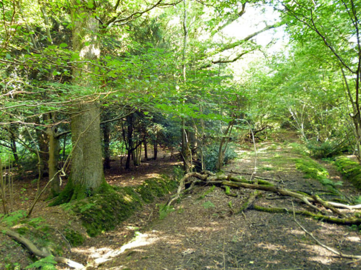 Creech Wood, near Anthill Common large photo 1