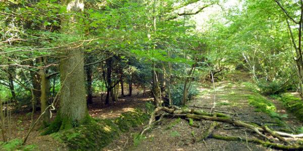 Creech Wood, near Anthill Common