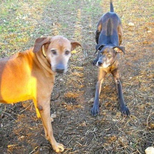Dog walk at Crickley Hill Country Park