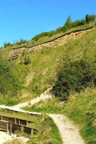 Dog walk at Crickley Hill Country Park photo