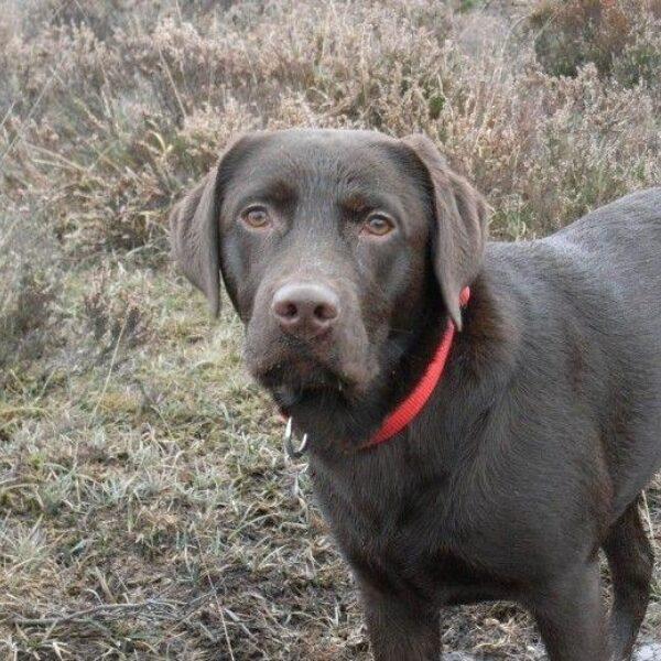 Dog walk at Crockford Clump