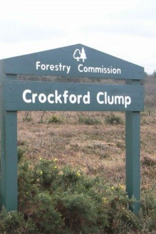 Dog walk at Crockford Clump photo