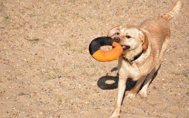Cudmore Grove Country Park Dog walk in Essex