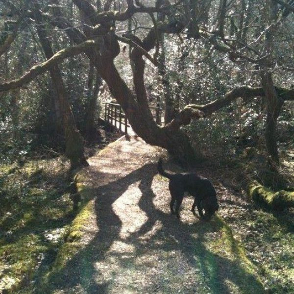 Dog walk at Culverley (New Forest)