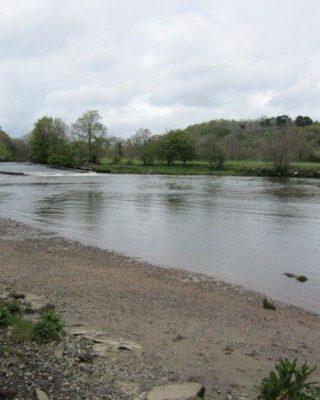 Dog walk at Dartington To Totnes Along The River Dart