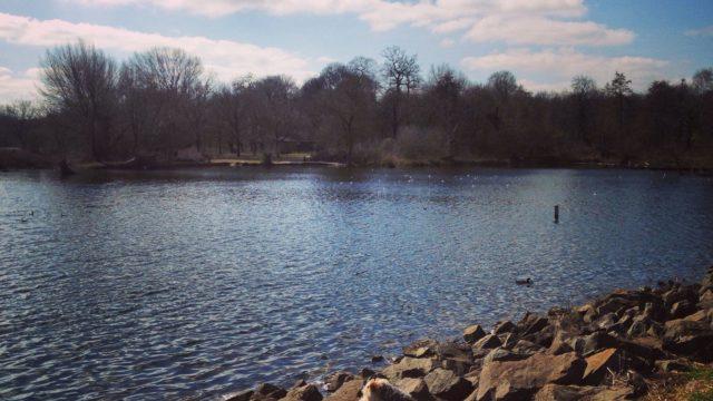 Dog walk at Daventry Country Park