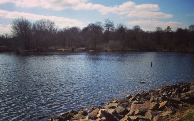 Daventry Country Park Dog walk in Northamptonshire