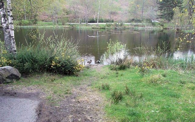 David Marshall Lodge Dog walk in Stirlingshire