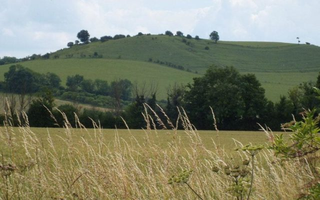 Deacon Hill, Pegdson Dog walk in Bedfordshire