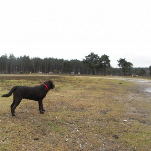 Dog walk at Deerleap (New Forest)