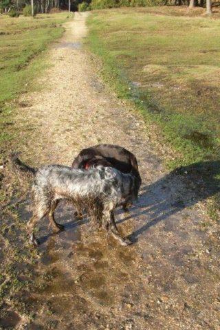 Dog walk at Deerleap (New Forest) photo
