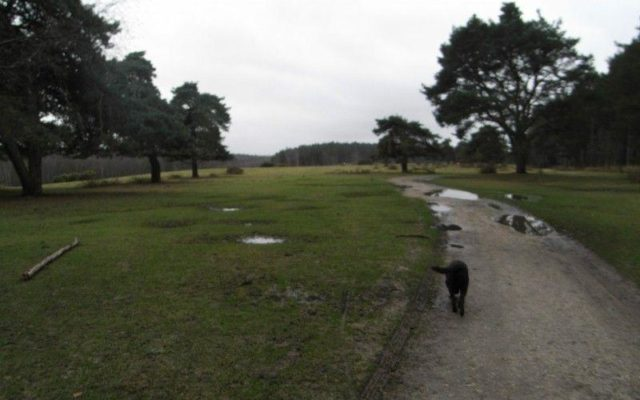 Deerleap (New Forest) Dog walk in Hampshire