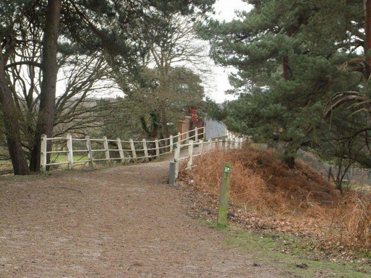 Deerleap (New Forest) large photo 5