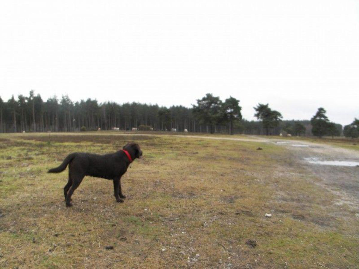 Deerleap (New Forest) large photo 6