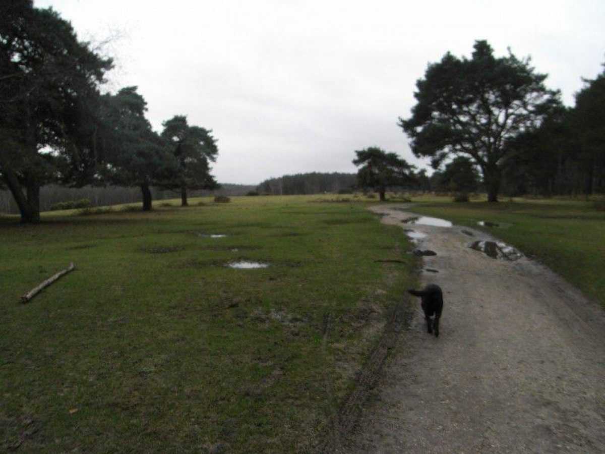 Deerleap (New Forest) large photo 7