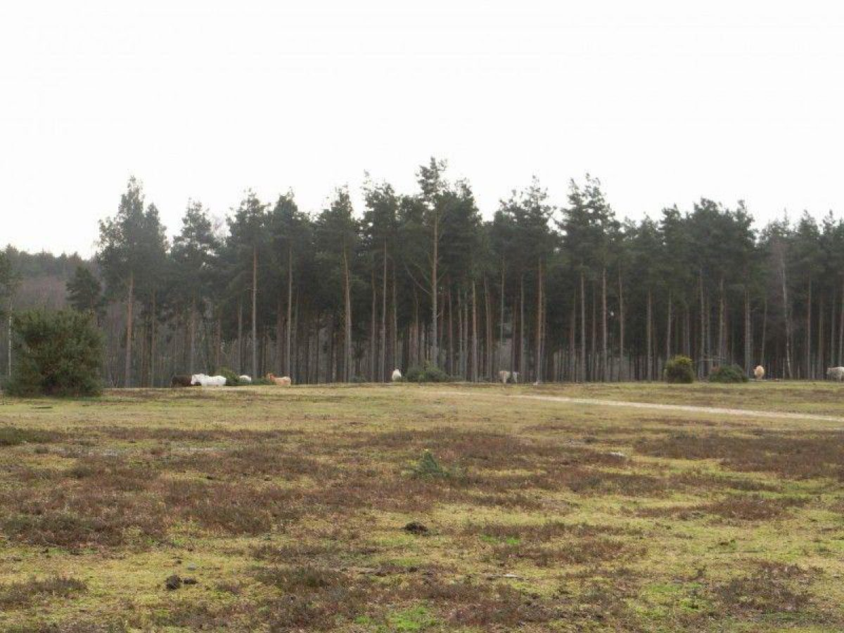 Deerleap (New Forest) large photo 9