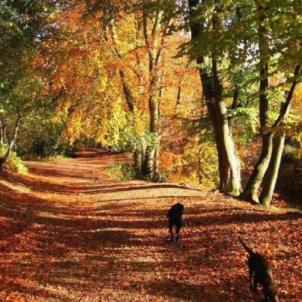 Delamere Forest Walk photo 1