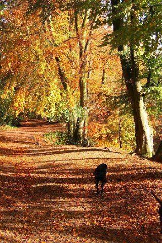 Dog walk at Delamere Forest Walk photo