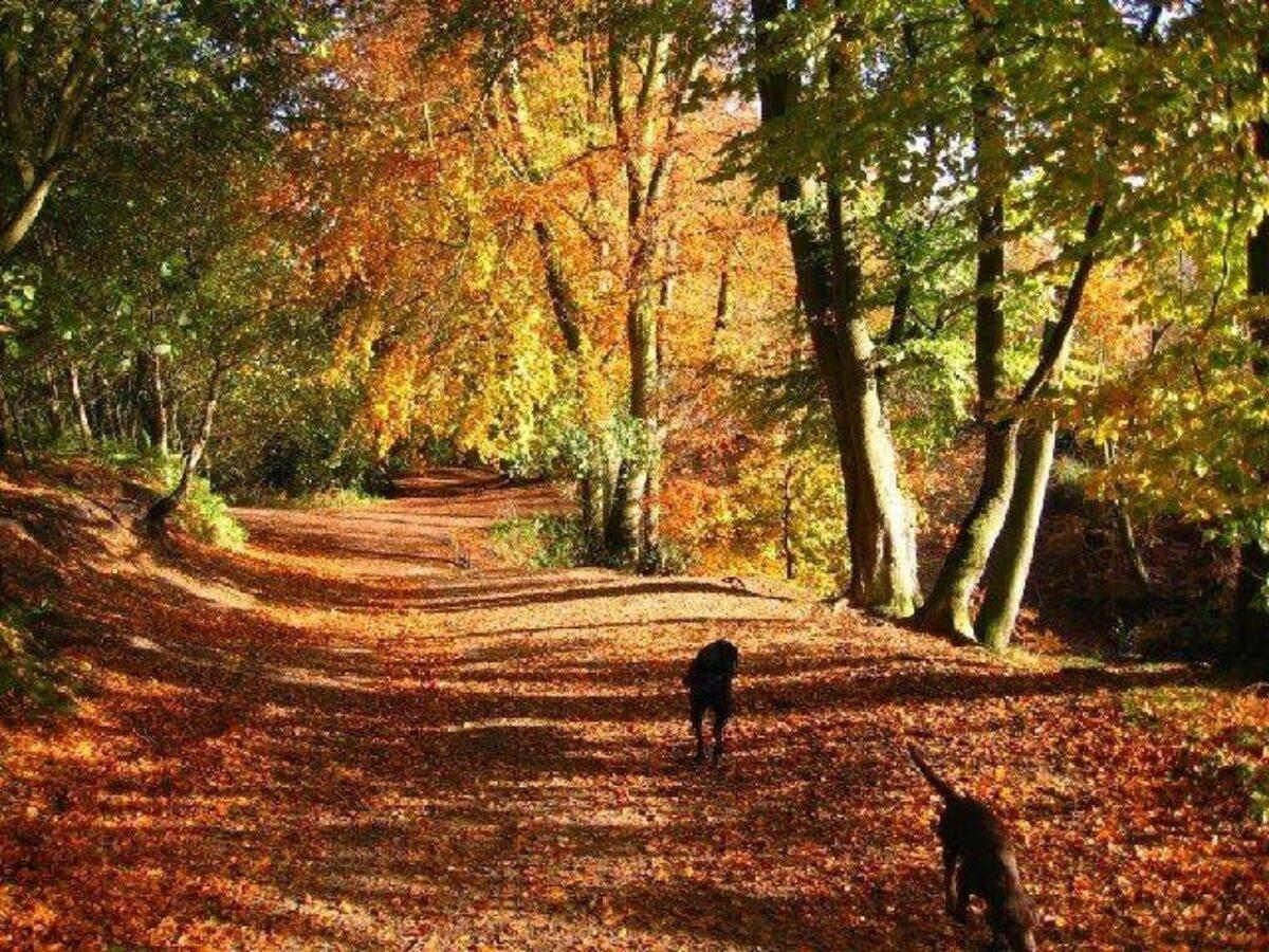 Delamere Forest Walk large photo 1