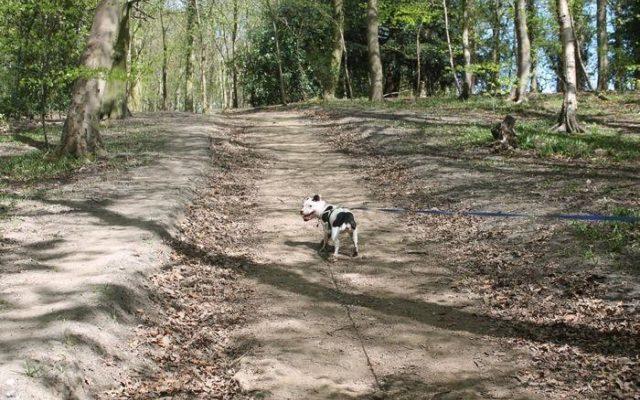 Delph Wood, Bingley Dog walk in Yorkshire (West)