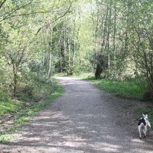Delph Wood, Bingley