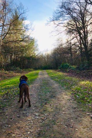 Dog walk at Dene Park photo