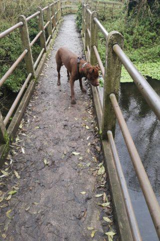 Dog walk at Denham Country Park photo