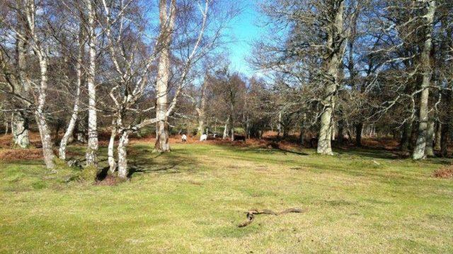 Dog walk at Denny Wood Campsite