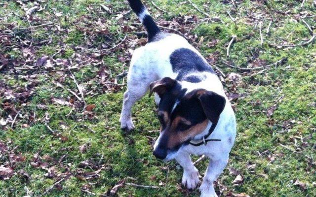 Denny Wood Campsite Dog walk in Hampshire