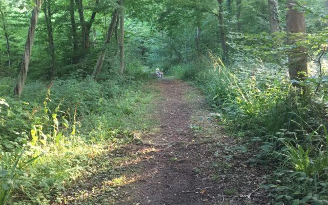 Dering Woods Dog walk in Kent