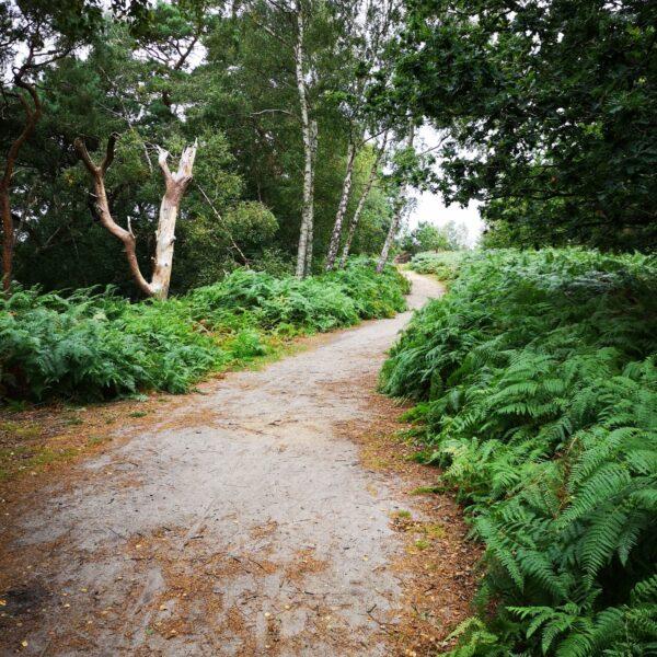Dersingham Bog photo 10
