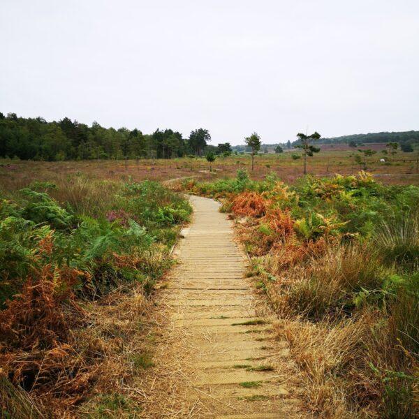 Dersingham Bog photo 5