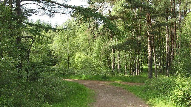 Dog walk at Devilla Forest