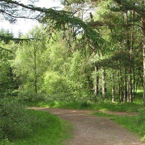 Devilla Forest photo 1