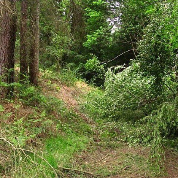Devilla Forest photo 3