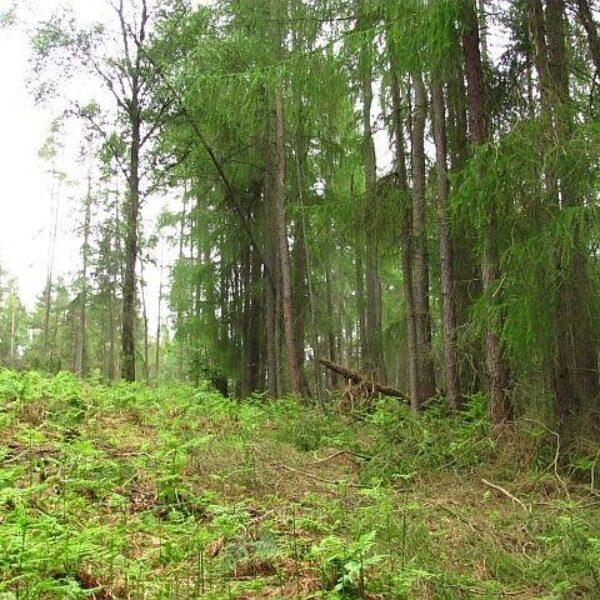 Devilla Forest photo 4