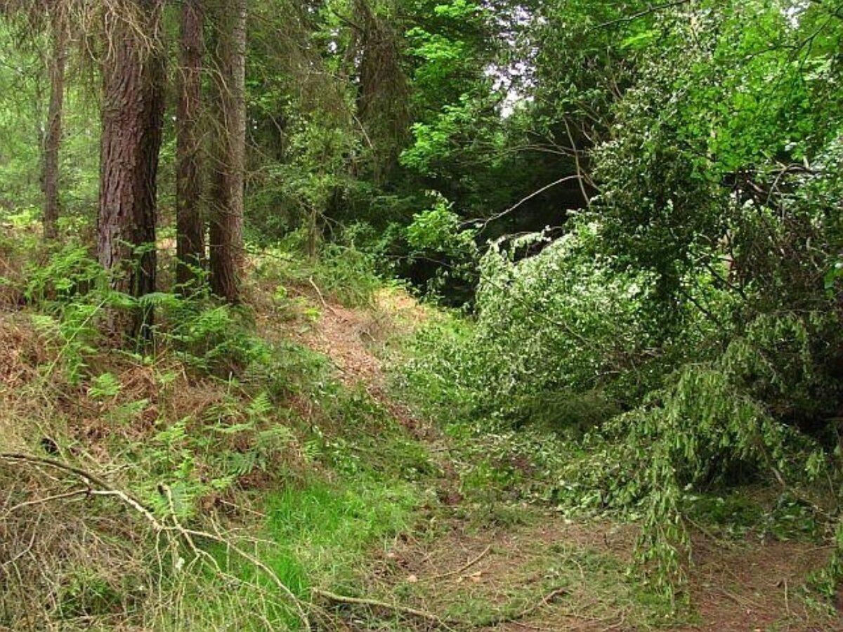 Devilla Forest large photo 3