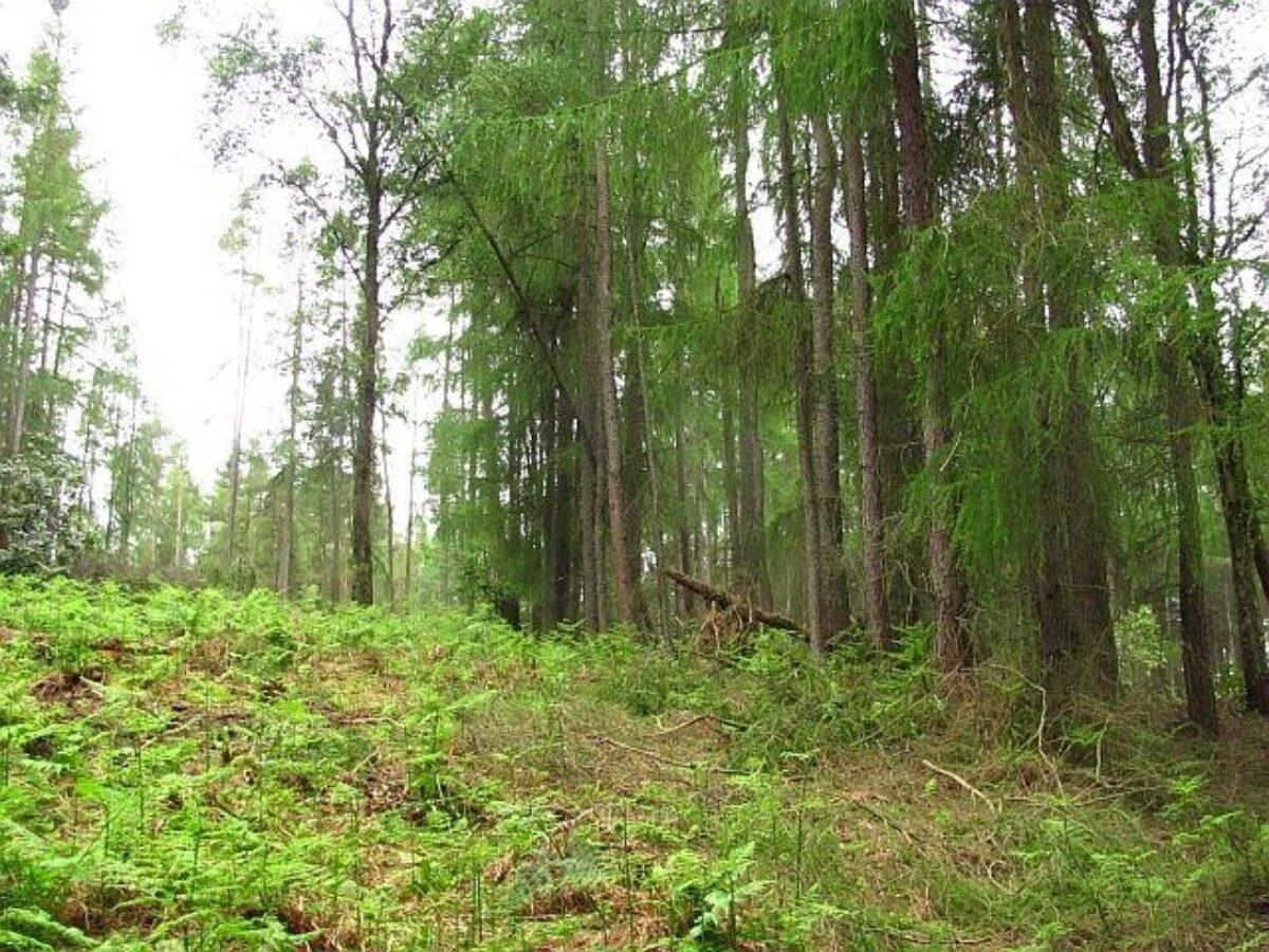 Devilla Forest large photo 4