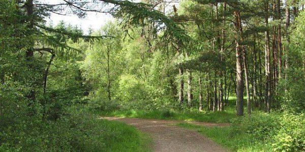 Woodhill Wood, Alva