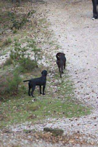 Dog walk at Dibden Inclosure (New Forest) photo