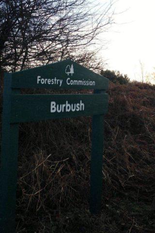 Dog walk at Disused Railway At Burley photo