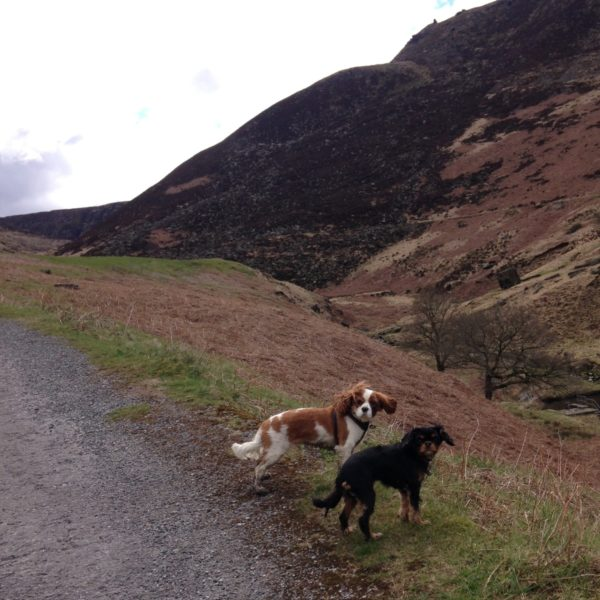 Dog walk at Dovestones Reservoir