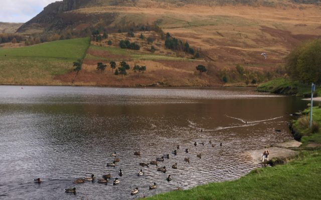 Dovestones Reservoir Dog walk in Lancashire