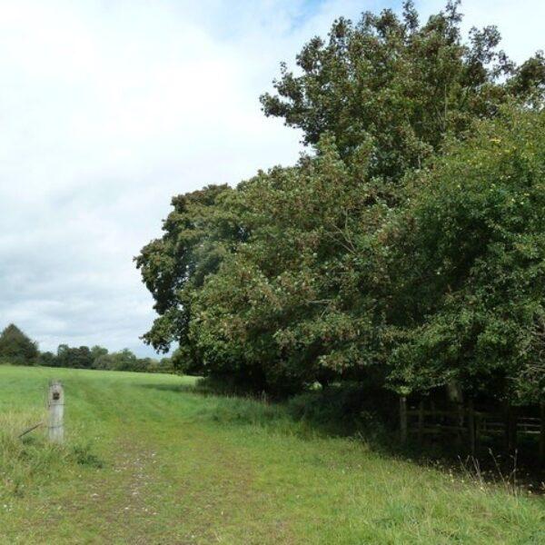 Dog walk at Droxford