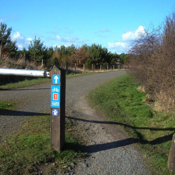 Dog walk at Druridge Bay Country Park