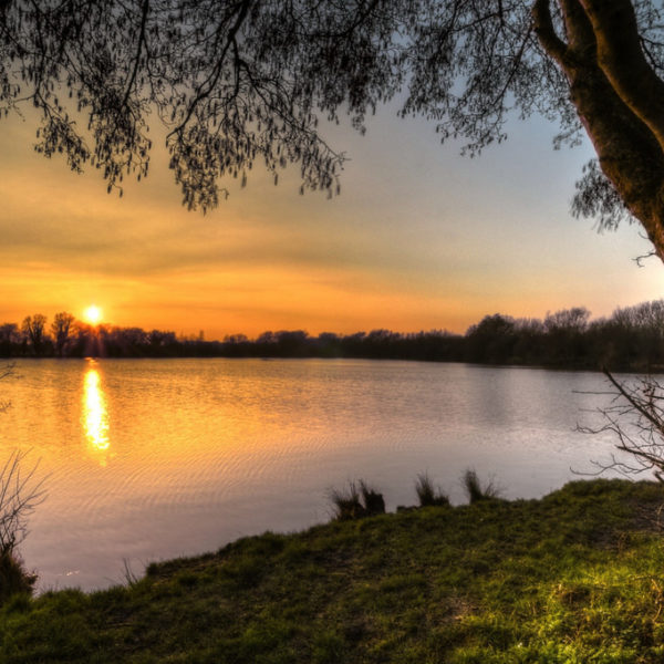 Dog walk at Ducklington Lake, Witney