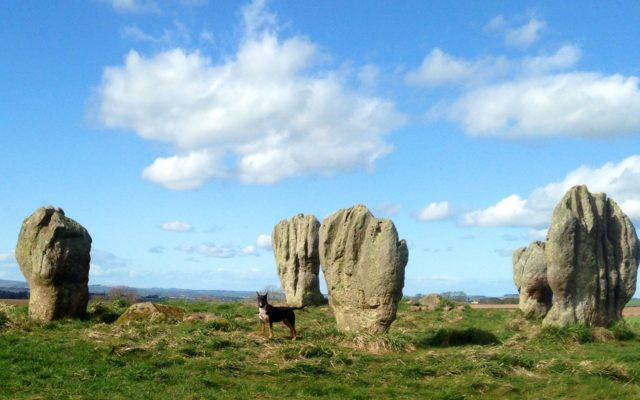 Duddo Stone Circle Dog walk in Northumberland